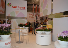 Anthura well presented with their extensive booth.