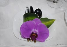 Orchid-dinner?