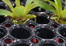 HerkuPlast has developed a new orchid propagation tray that allows more air circulation.