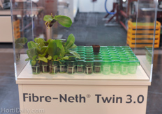 VanderKnaap introduced a new orchid propagation plug; Fibre Neth Twin 3.0