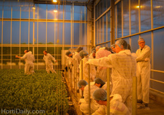 The group was fascinated by the eb and flow system on which the lisianthus are cultivated.