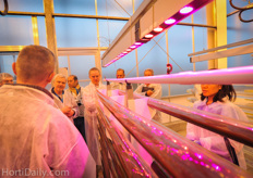 Algea might be the greenhouse crop of the future.